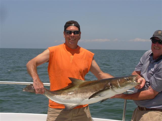 Cobia fishing report chesapeake bay for Chesapeake bay bridge fishing report